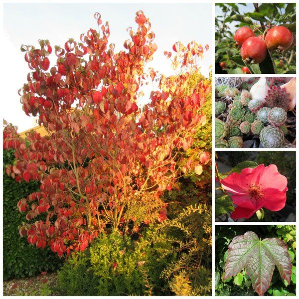 Marvelous Seite Gartengestaltung Mein sch ner Garten online