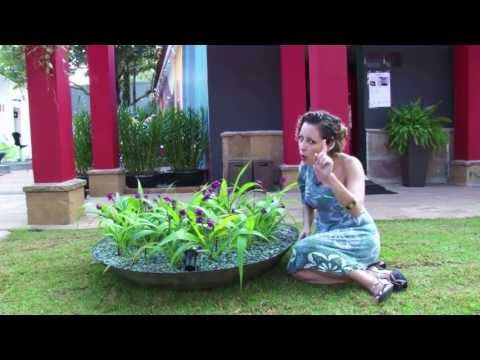 Como cuidar de orquídeas terrestres - YouTube