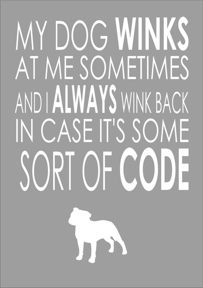 For All The Dog Lovers Out There - My Dog Winks At Me Sometimes - Staffy - Word Wall Art Typography Quote Dog