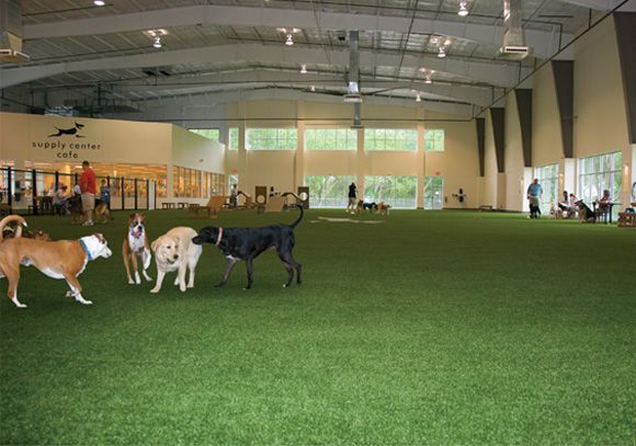 indoor dog park http://www.k9grass.com/images/wide/home3.jpg