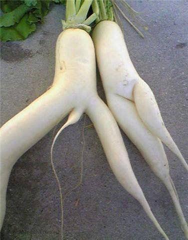 amazing-funny-vegetable