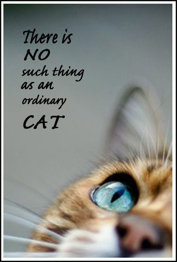 So true. Kudos to the photographer/Pin Creator! : o )
