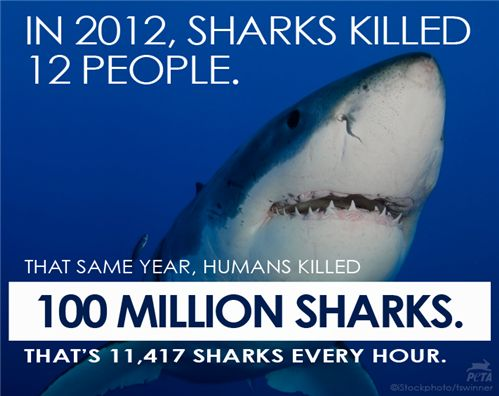 Who is deadliest predator of all? HINT: It's NOT sharks: http://www.peta.org/b/thepetafiles/archive/2013/08/04/the-deadliest-predator.aspx