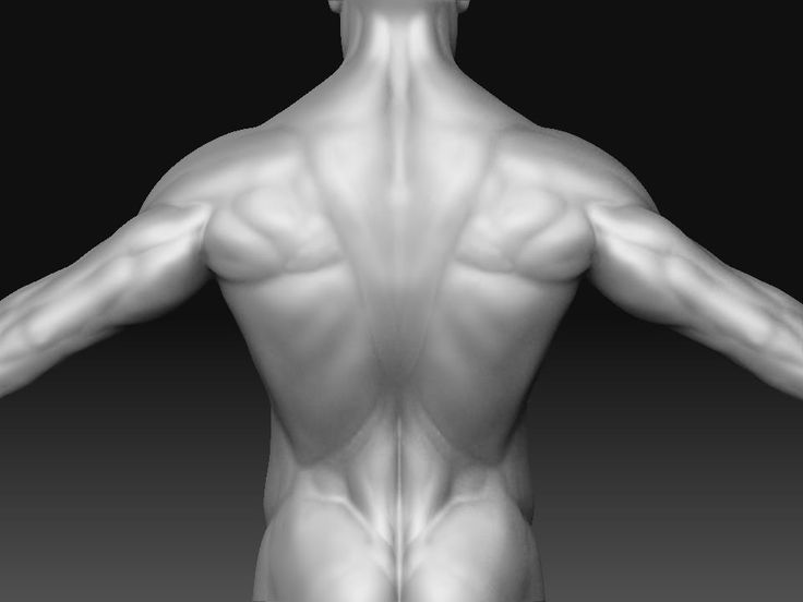 31 best male anatomy images on Pinterest | Anatomy, Anatomy ...
