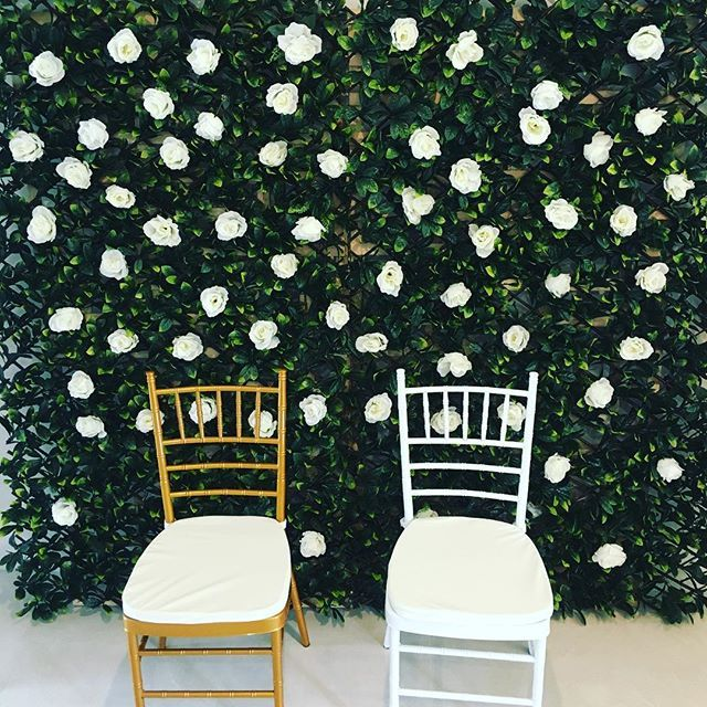 Hire our stunning Greenery Wall $100 featuring our gold and white Chiavari Chairs $8 each with cushion