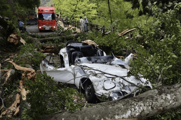 わずか1787万円台風で倒れた巨木に潰され大破したトヨタ2000GTその損害賠償が半額で和解の見込み