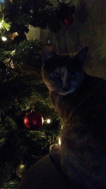 Christmas cat Luna