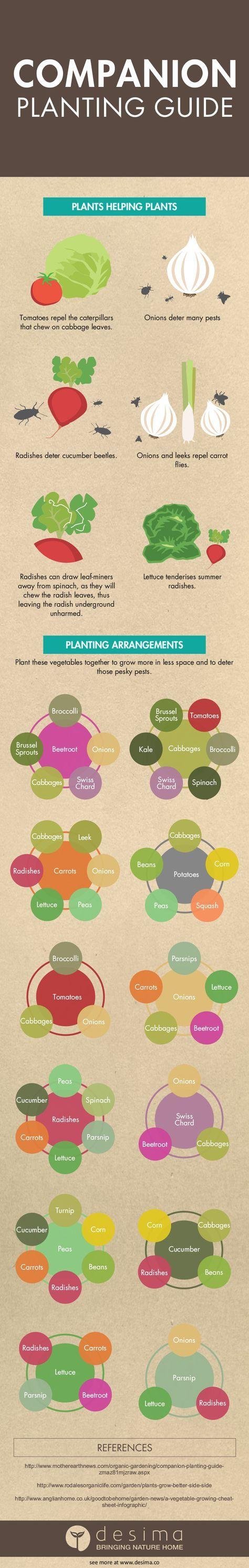 Planting veg layout looks a good idea