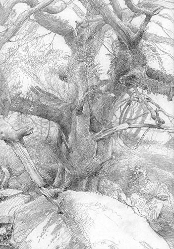 alan_lee_the lord of the rings_sketchbook_09_fangorn02_med.jpg (351×500)