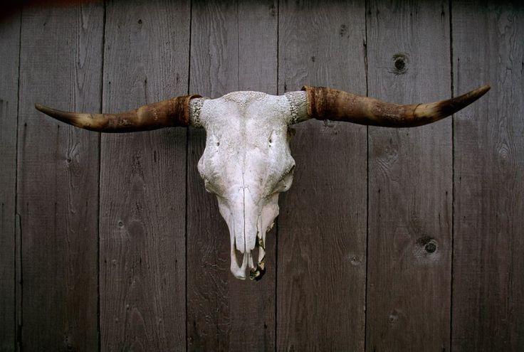Download 23 best images about Long Horn Skulls on Pinterest ...