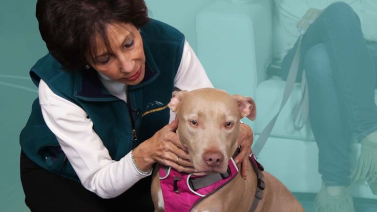 People Take Their Pets To A Pet Psychic For The First Time