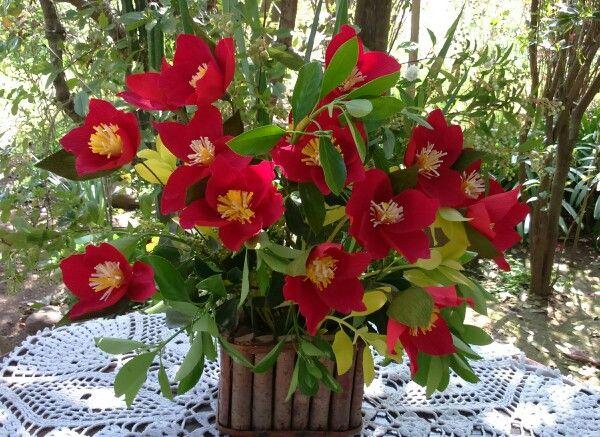 Flores de papel con follaje natural