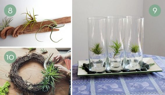 1000 images about indoor planters on pinterest posts a deer and air plant display. Black Bedroom Furniture Sets. Home Design Ideas