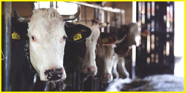 Agrarbetrieb - Landtechnik & Innovative Landwirtschaft