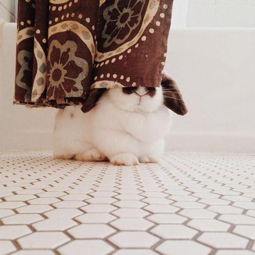 Les 411 meilleures images du tableau un lapin la maison for Avoir un lapin a la maison