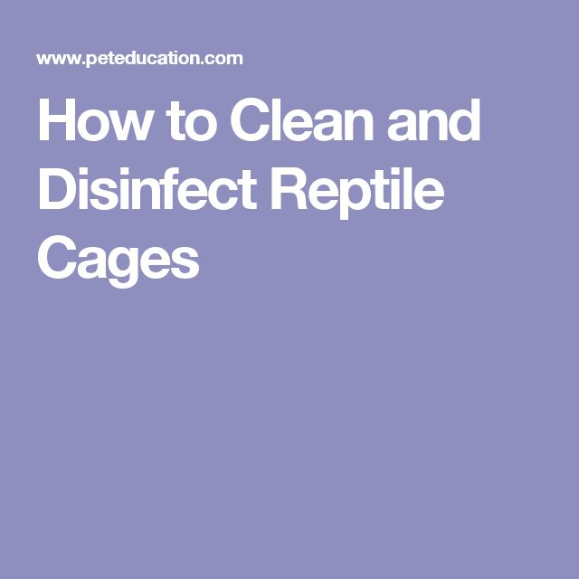 How to Clean and Disinfect Reptile Cages