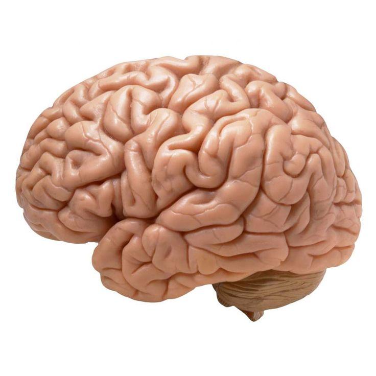 #Frasi sul #cervello http://aforismi.meglio.it/frasi-cervello.htm  Citazioni e pensieri sul cervello, parte fondamentale del corpo umano spesso sinonimo di intelligenza e raziocinio: saper agire con cervello, d'altra parte, oggi è considerata una dote sempre più rara.