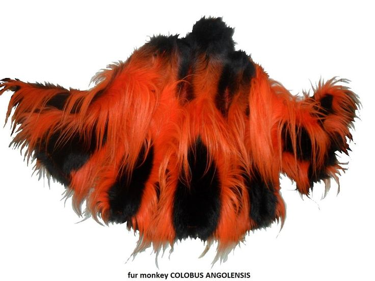 fur cape monkey colobus angolensis. fur monkey perfect condition . cites exempt