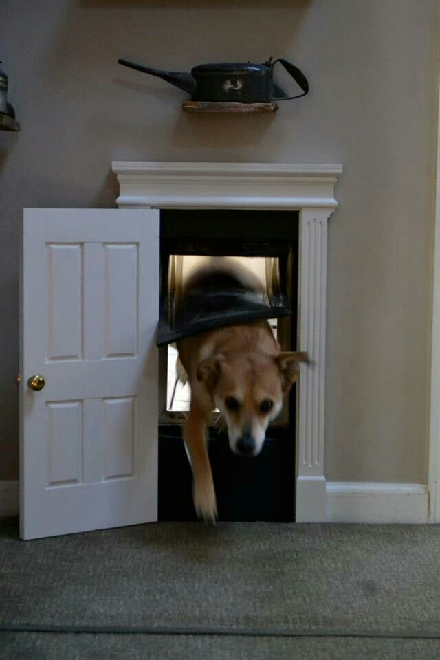 doggie door . U could lock it when you leave..----This is so cool.Im going to build one...
