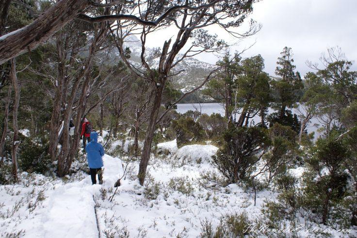 Cradle Mountain - Lake St Clair National Park. 'Christmas' in November, Snow, Dove Lake Circuit | TheNomadicExplorers.com