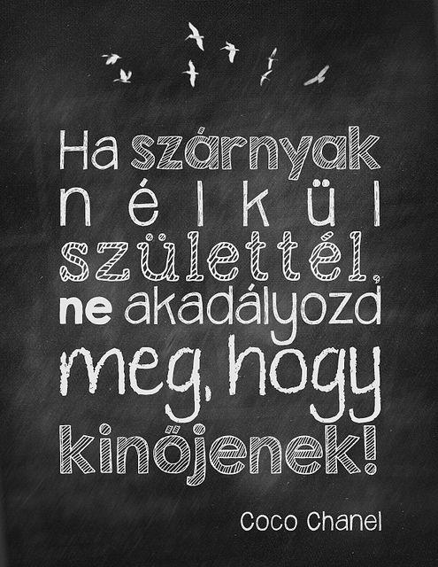 szarnyak-nelkul-coco by boldcolorglass, via Flickr
