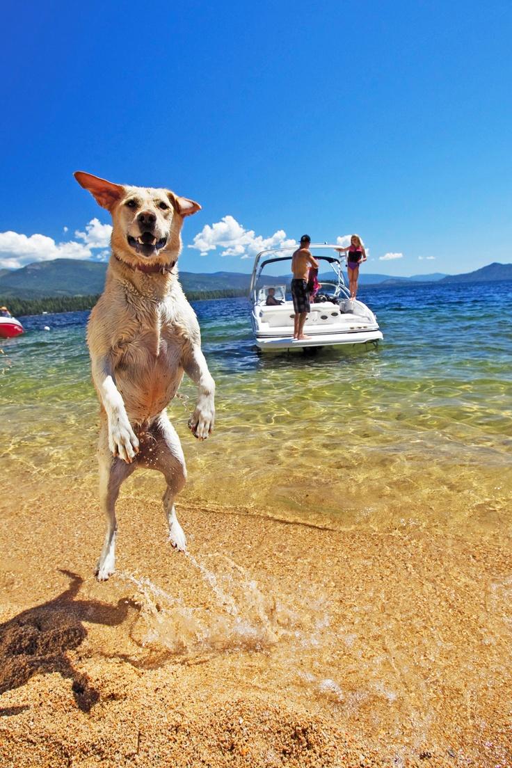 Bayliner 2015 Bowrider - One giant leap for dog kind! #dogs #boats