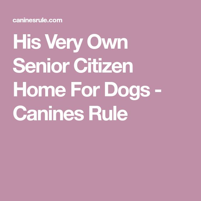 His Very Own Senior Citizen Home For Dogs - Canines Rule