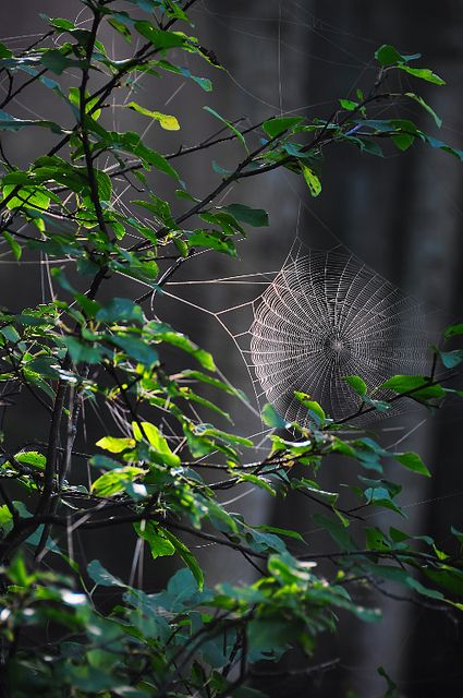I thought this spider web was pretty cool with the light hitting it like it is.