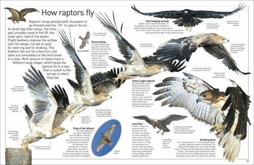 Teaching Science North American Birds Of Prey Spg Family Adventure Network In 2020 Birds Of Prey Prey Sharp Shinned Hawk