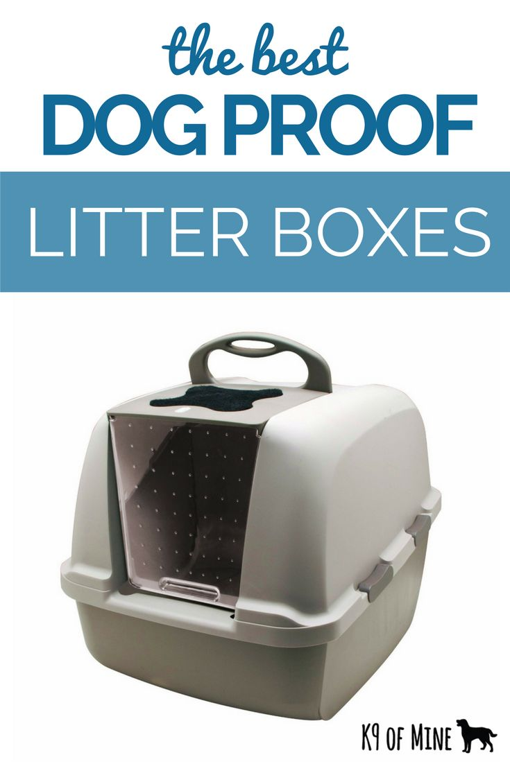 Our list of the 5 best dog-proof litter boxes!