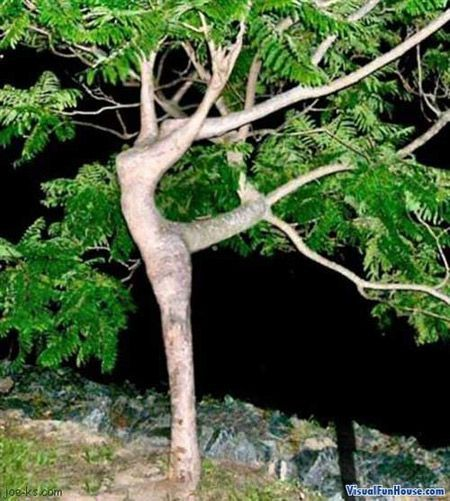 This tree looks like it's dancing!