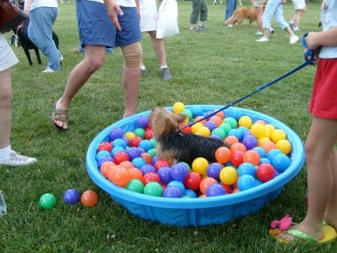 dog pool filled with plastic balls ~ great for puppies