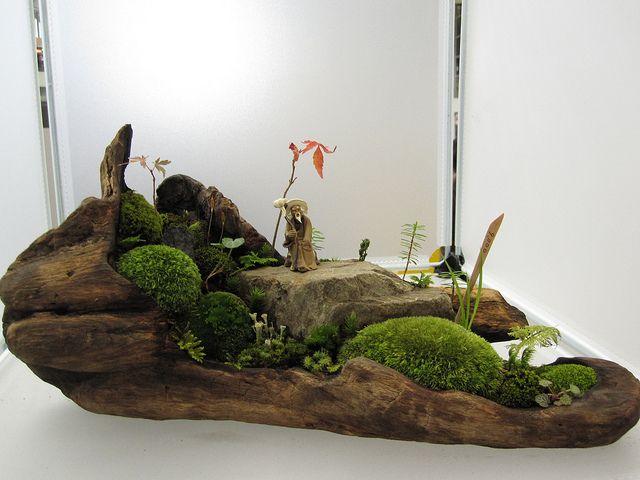mini bonsai garden in driftwood by mynsteria, via Flickr