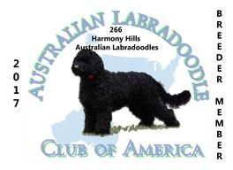 Harmony Hills Australian Labradoodles. Australian Labradoodle puppies for sale, raised in our home. Located in Lewiston, ID.