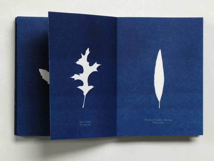 106 best cyan \ sun images on Pinterest Printmaking, Sun prints - fresh blueprint paper name