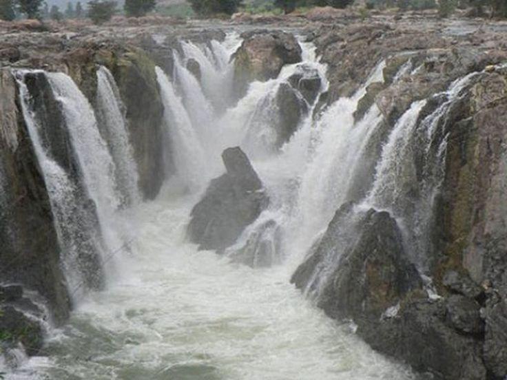 Cauvery Wildlife Sanctuary - in Karnataka, India