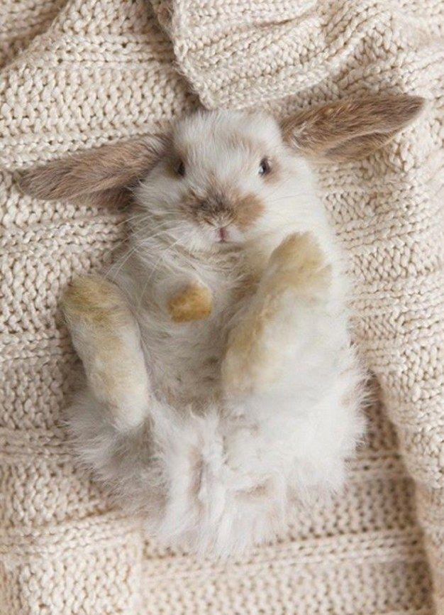Beschwingtes Kaninchen #rabbitsrock