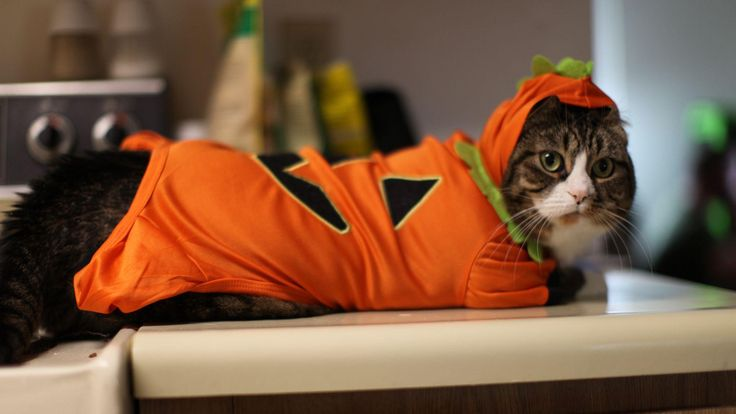 halloween cat image https://www.hdwallpaperspop.com/halloween-cat-image/