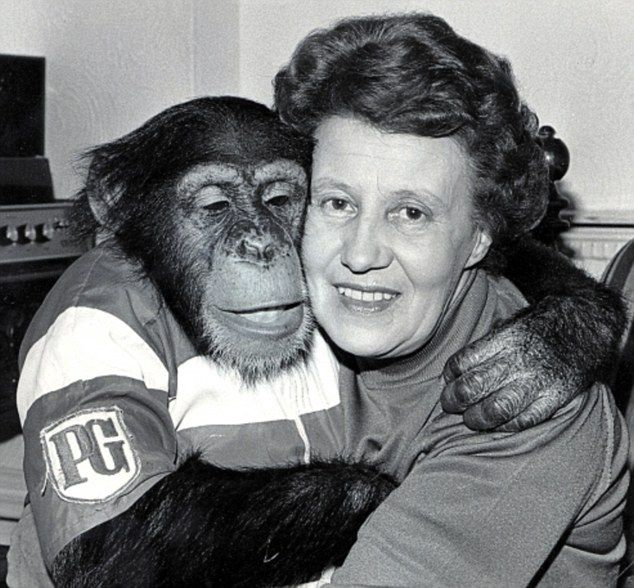 Molly Badham with one of her chimps who starred in the tea commercials