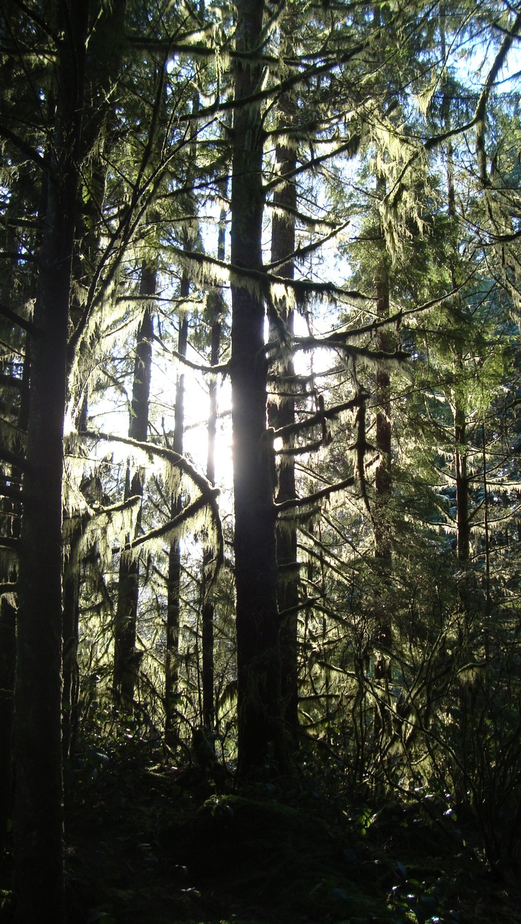 Lynn Headwaters, North Vancouver BC