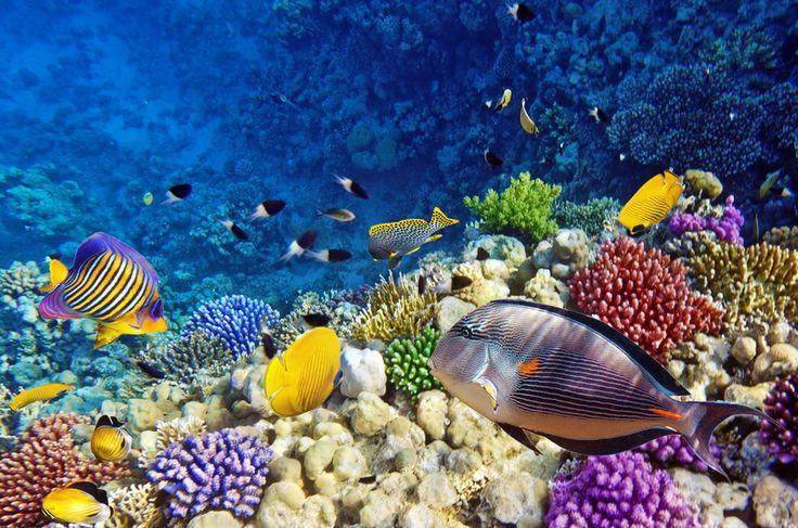 Marsa Alam, Red Sea, Egypt.