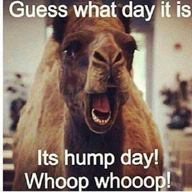 Hump day funny quote | Words | Pinterest