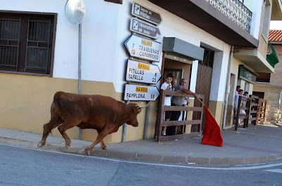 Santacara: Vacas de Vicente Domínguez - Año 2016 (9)