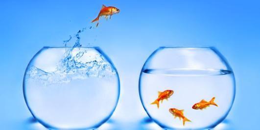 KJÆLEDYR: Hvordan trøster man et barn som har mistet en gullfisk , et marsvin eller en hund