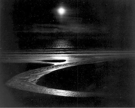 Edward Weston   Dune