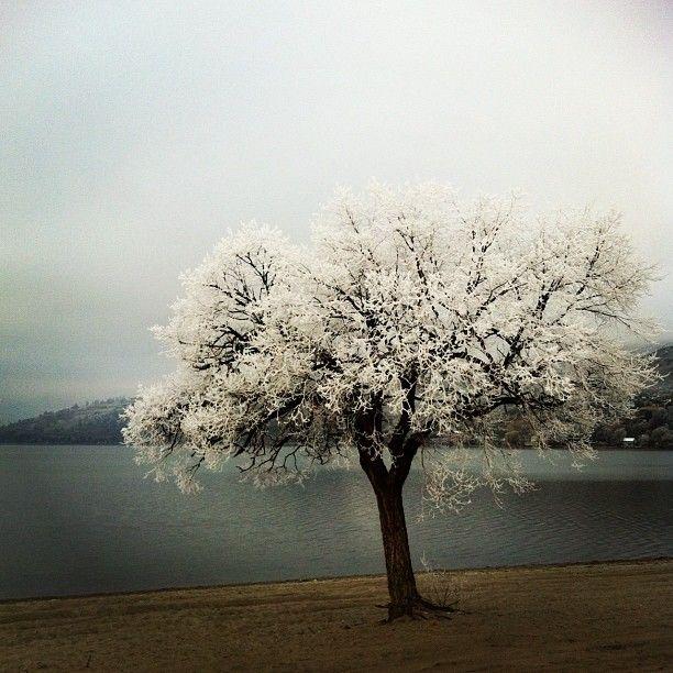 Frost on Kalamalka Lake, BC. Vernon BC