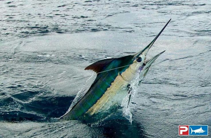 629 best images about boating and fishing on pinterest for Florida saltwater fishing