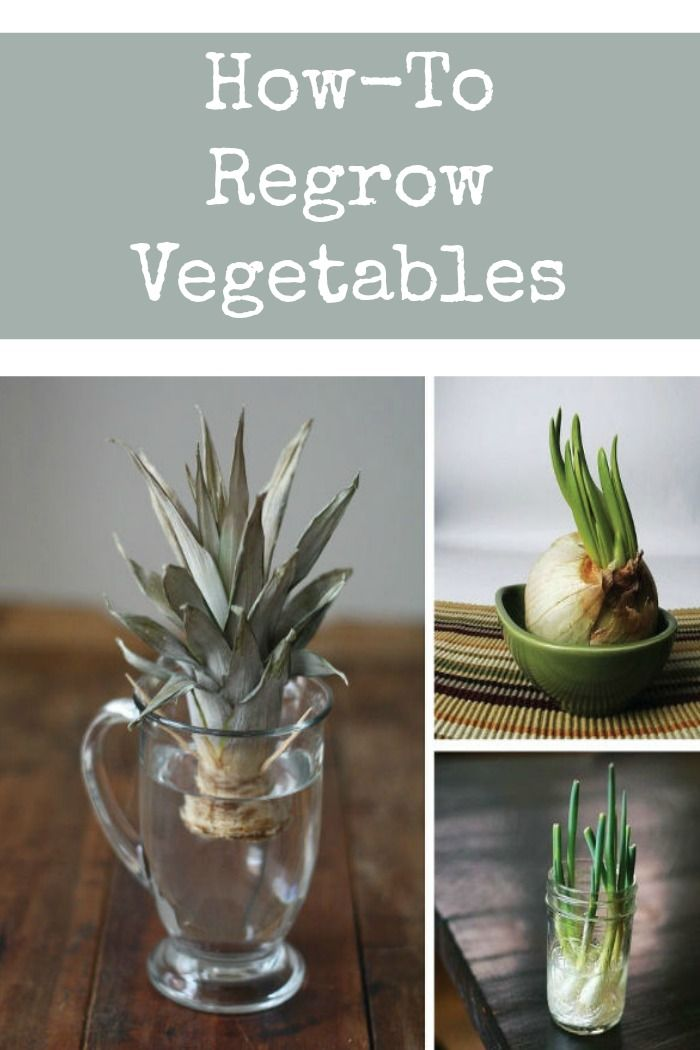 Complete Guide To a Low Cost Vegetable Garden ! How to regrow vegetables from scraps !