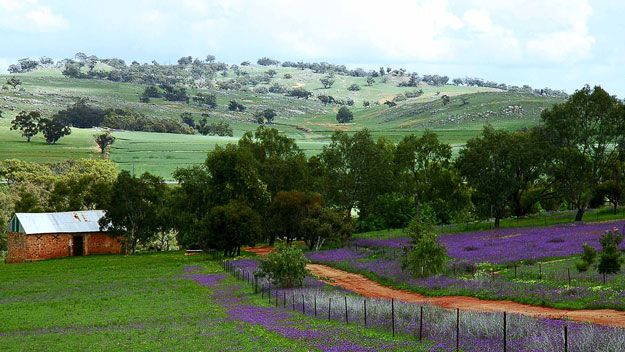 York Western Australia