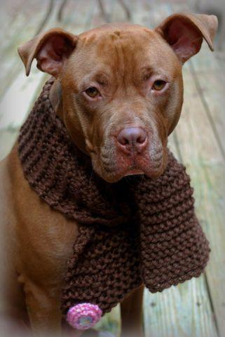 Seriously, Heather Schutz!  Dog scarfs!